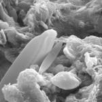 Encuentran fósiles en meteoritos: ¿Vida extraterrestre?