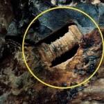 Fosil de tornillo de hace 300 millones de años