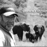 El viaje de los elefantes para dar su pésame.. ¿Cómo lo supieron?