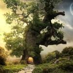 Meditación con árboles
