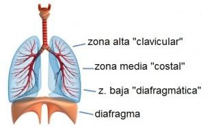clavicular