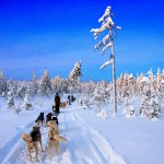 Un paseo por un paraíso helado (Kainuu, Finlandia)