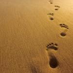 12 pasos para estar fenomenal en el mundo y en nuestros tiempos