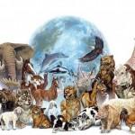 Los Animales de Poder: Espíritu y Vida del Universo