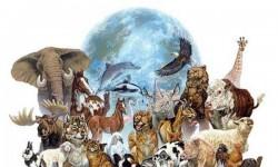 Animales de poder