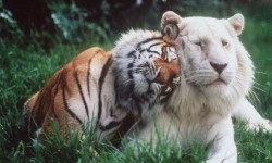 la consciencia de los animales