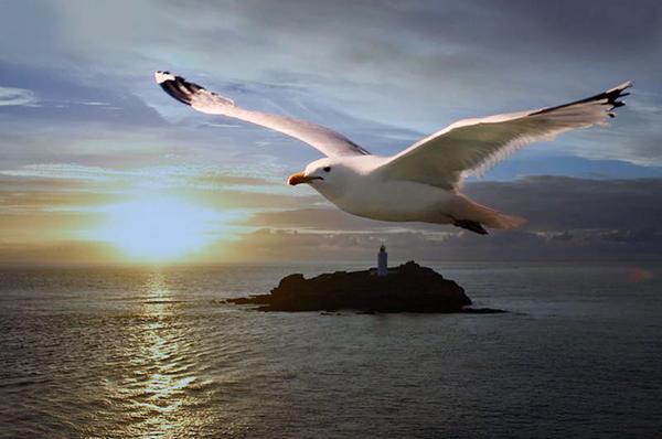 El vuelo de la gabiota