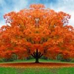 Como captar la Energía de los árboles