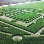 Crop Circle hallado en Chualar