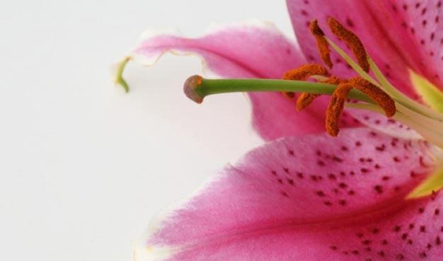 vive como las flores