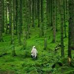 El bosque Interior