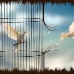 Avanzando hacia la libertad interna