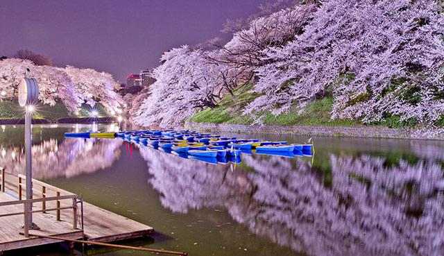 arboles de japón Archivos -