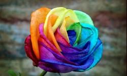 Influencia d elos colores