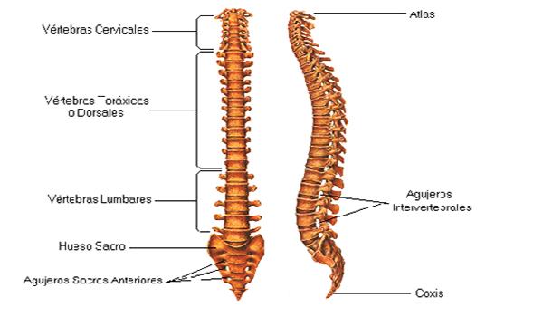 Causas emocionales de la columna vertebral