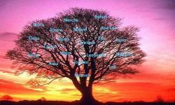El árbol de los amigos