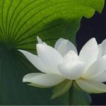 Tipos de Mantras y sus significados