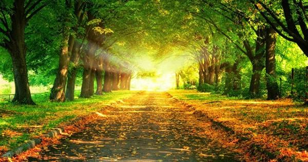 Al final del Camino (Reflexiones para el fin de semana)