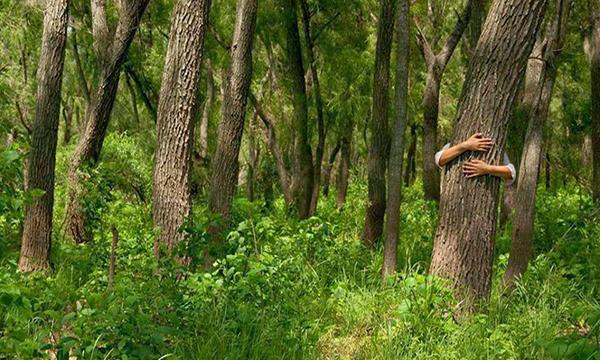 árboles que al abrazarlos sanan