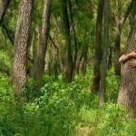 Árboles que al abrazarlos sanan partes del cuerpo