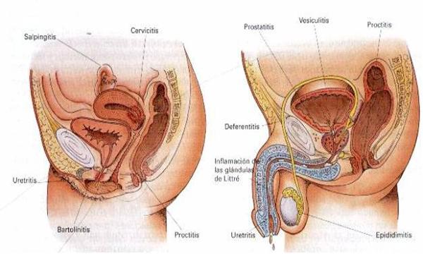 Pisoteando los genitales