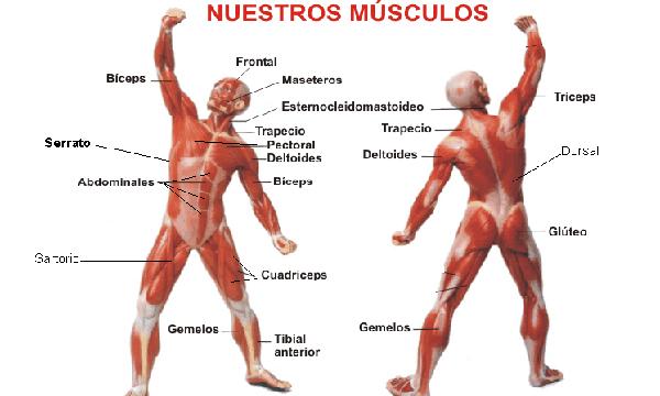 Causas emocionales de los músculos
