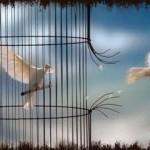 Reprogramación, cambio y libertad interior