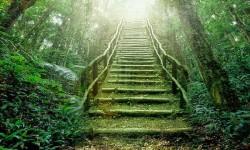 Camino a la sabiduría