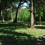 2 ejercicios para sentir la energía de los árboles