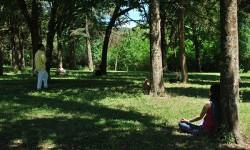 Ejercicio sentir la energía de los árboles
