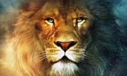 Animal de poder
