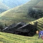 El cuento del granjero chino: ¿Por qué no debemos anticiparnos a las consecuencias?