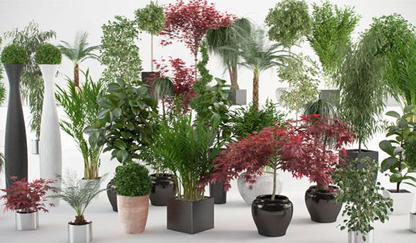 Plantas para cada enfermedad