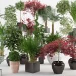 Guía AZ de plantas para cada enfermedad