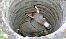 Relato: El burro en el pozo