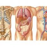 Los 5 órganos y su función psicológica