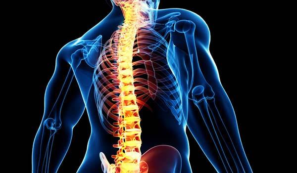 La conexión entre la columna y los demás órganos