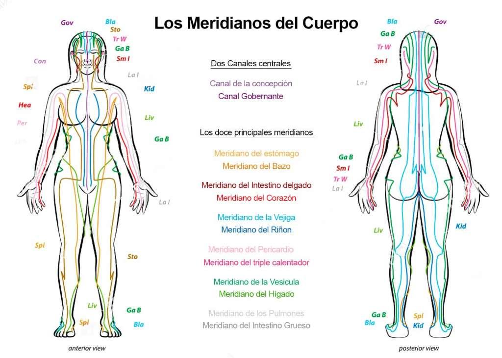 Meridianos del cuerpo