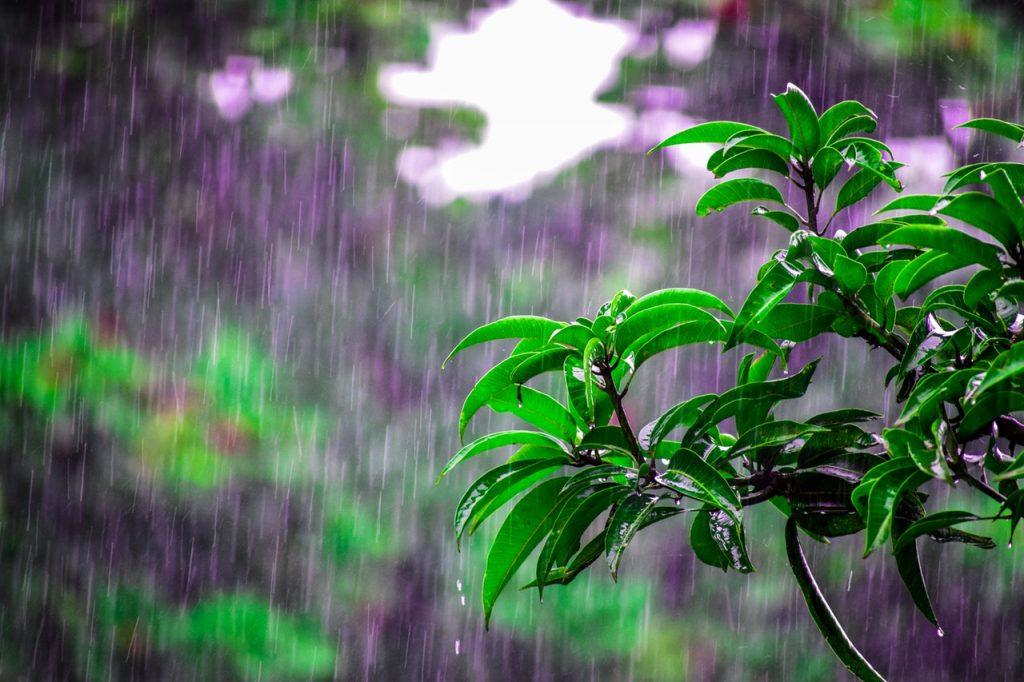 apreciar el sonido de la lluvia