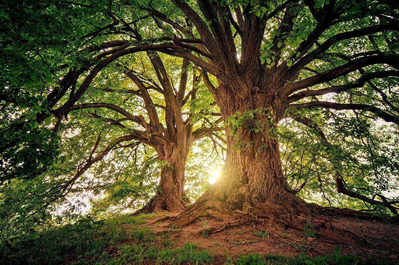 La conciencia colectiva reflejada en la naturaleza