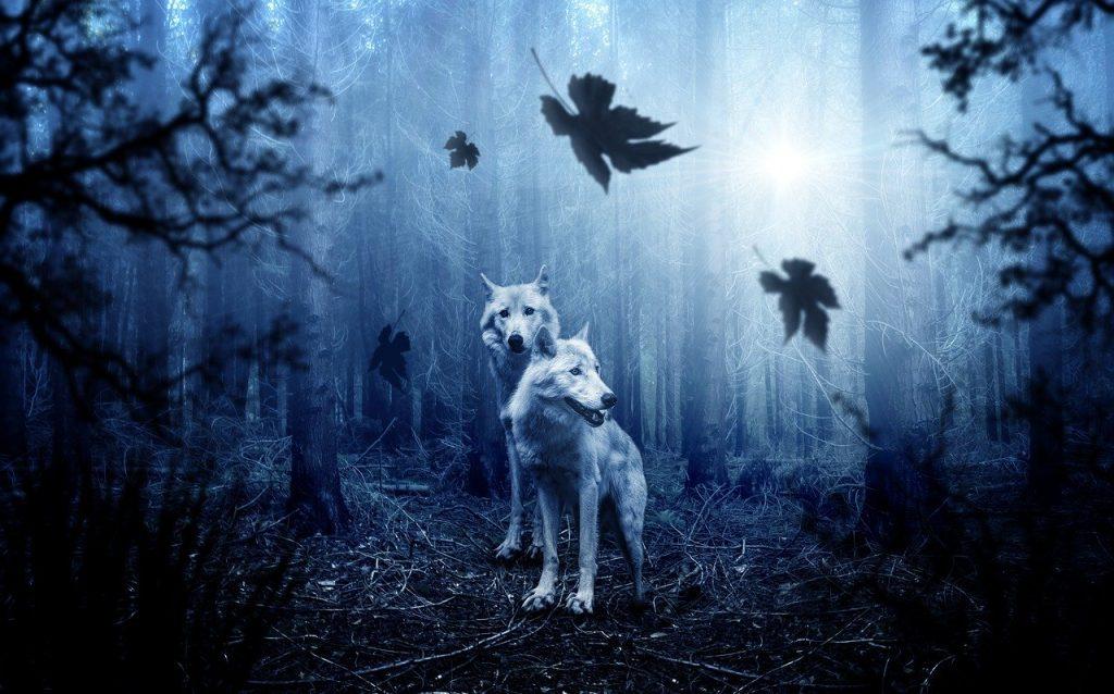 Animal espiritual de lobos