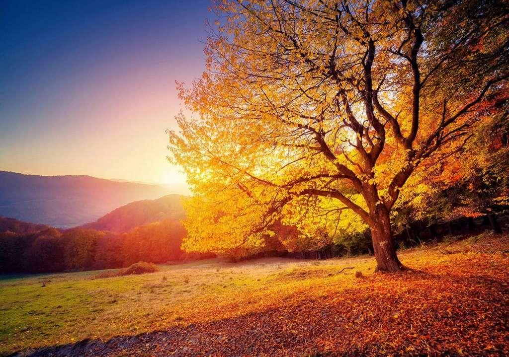 Un atardecer y un árbol. Ejercicio de conexión a tierra.