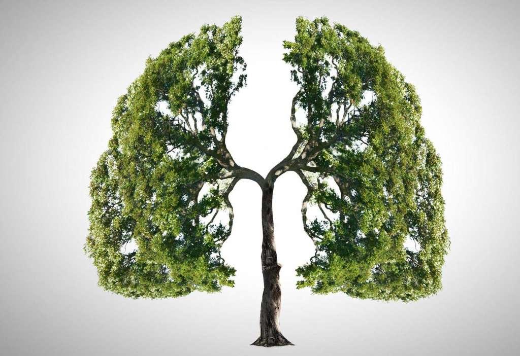 Limpieza pulmonar cuanfdo  las emociones afectan al cuerpo