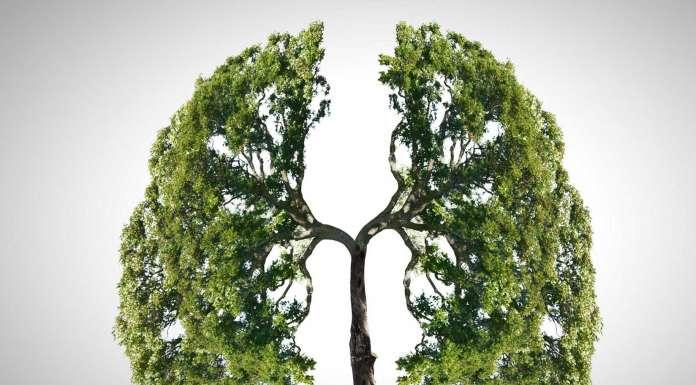 Limpieza pulmonar