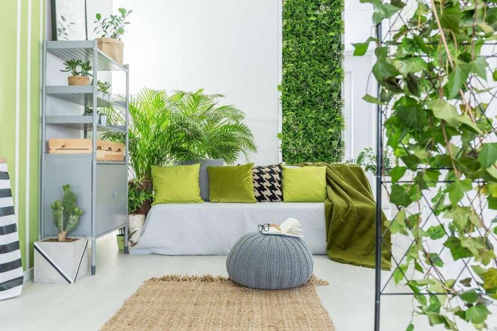 Plantas en tu hogar.