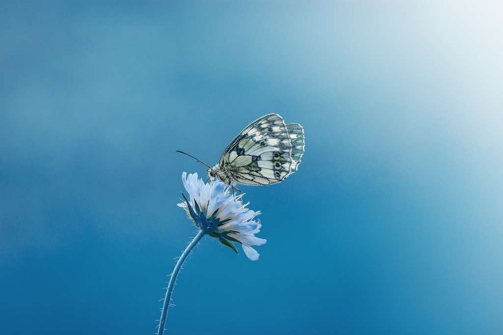 Mariposa sobre una flor. Maneras de comunicarse con la naturaleza.